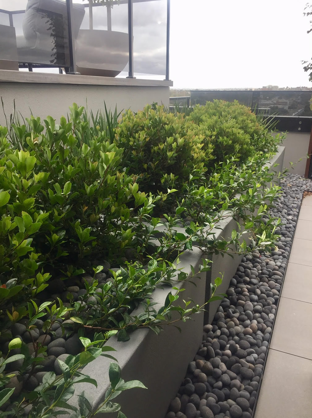 Large Planters with Plants